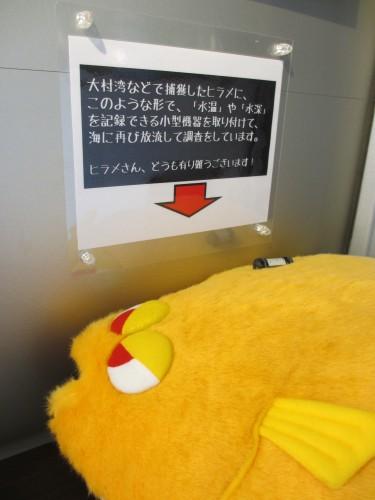 ヒラメぬいぐるみ (1)