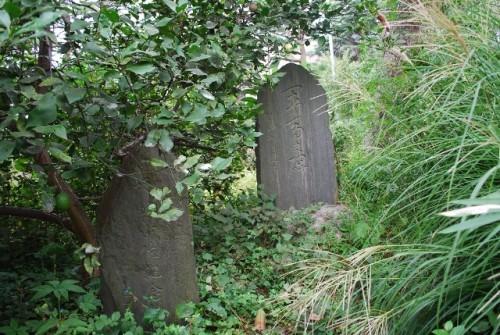 夏草に埋もれた軍馬碑・243KB
